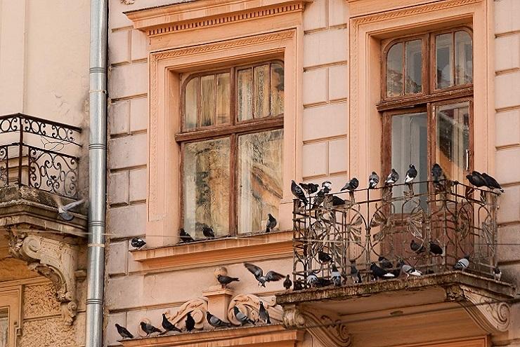 ahuyentador palomas leroy merlin, ahuyentador palomas ultrasonidos, ahuyentador palomas electrico, ahuyentador de palomas leroy merlin, ahuyentador de palomas efectivo, ahuyentador de palomas eficaz, ahuyentador de palomas liquido, ahuyentador de palomas por sonido, ahuyentador de palomas portatil
