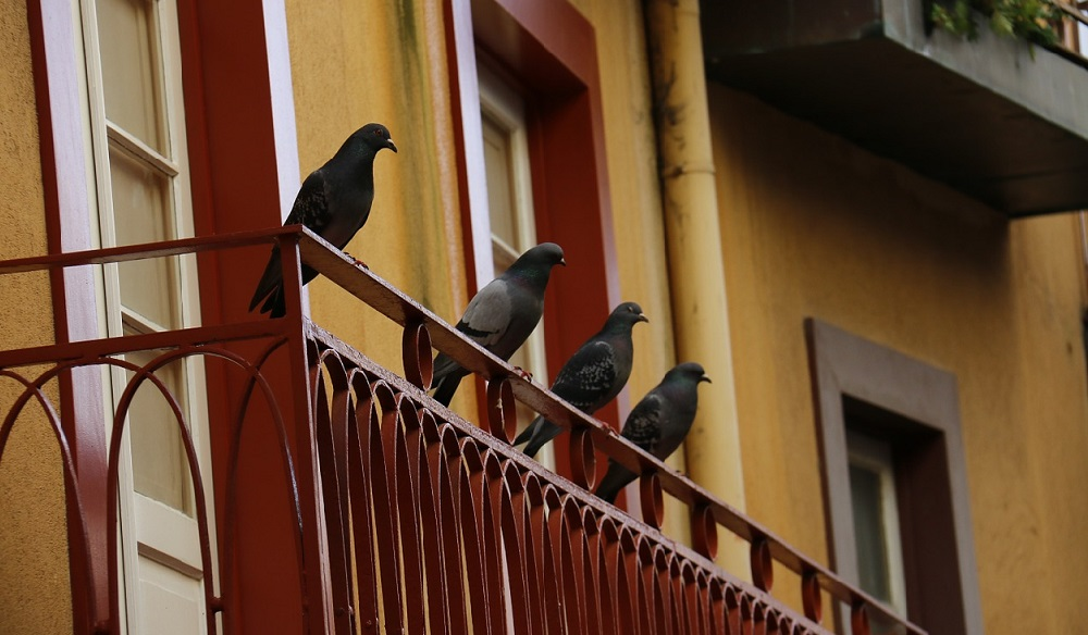 anti palomos, anti aves, ahuyentador de aves, ahuyentador palomas, amazon ahuyentador de palomas, leroy merlin antipalomas
